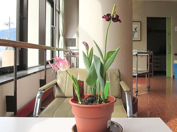 患者様と共に季節の作品を作り、花を育てました